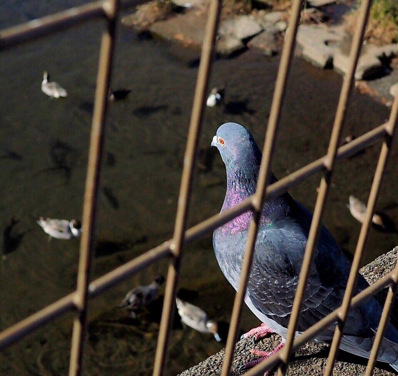EyeEm Birds Birds Bird Bird Of Tokyo Pmg_tok