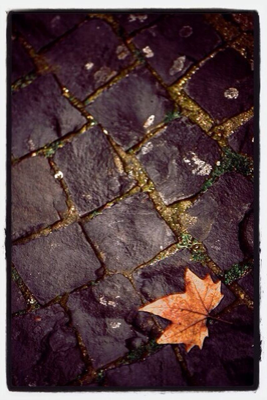 leaf, autumn, change, dry, no people, close-up, nature, outdoors, day, maple, maple leaf, beauty in nature