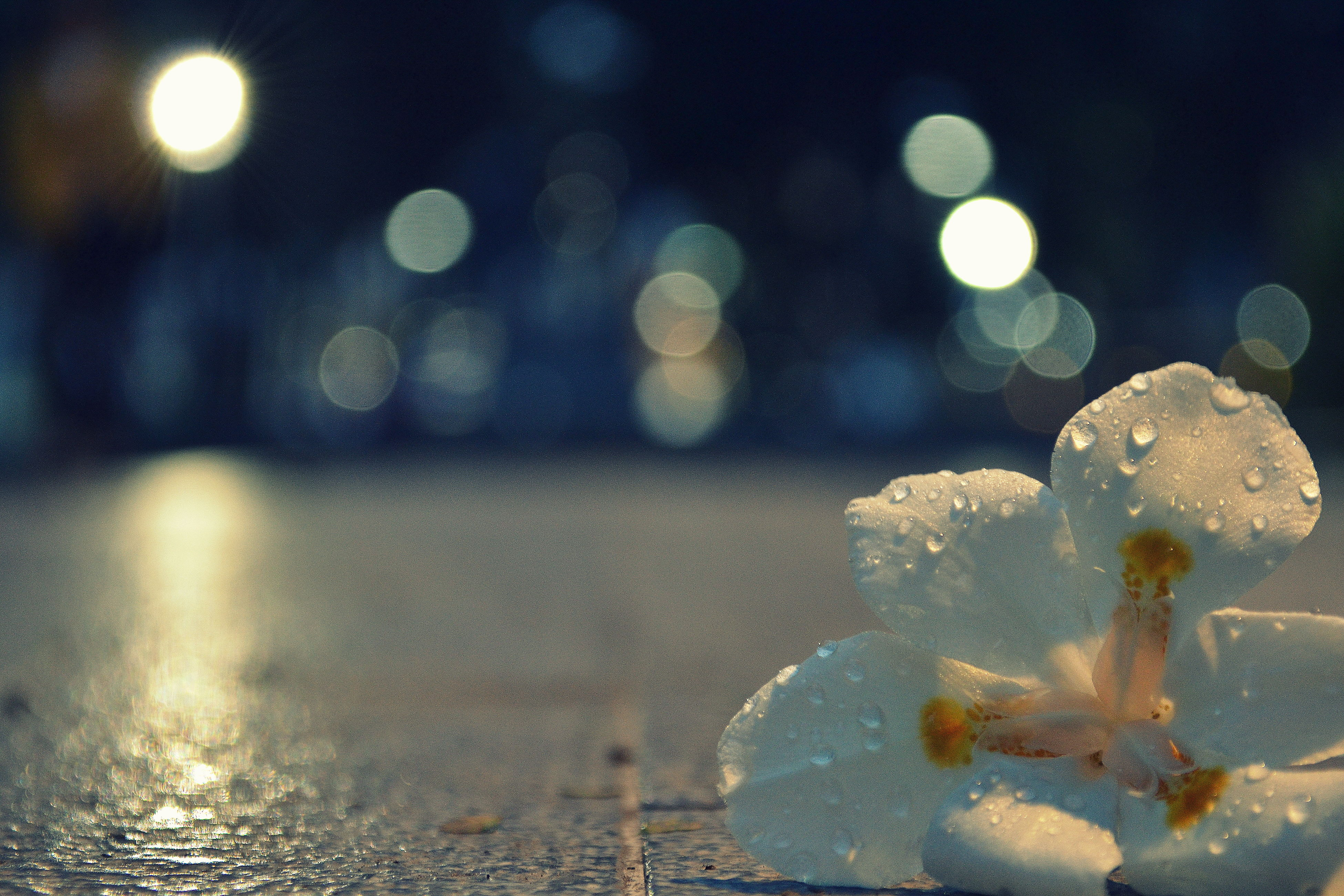 illuminated, night, water, wet, defocused, street, lighting equipment, rain, close-up, drop, reflection, glowing, light - natural phenomenon, circle, no people, weather, outdoors, lens flare, pattern