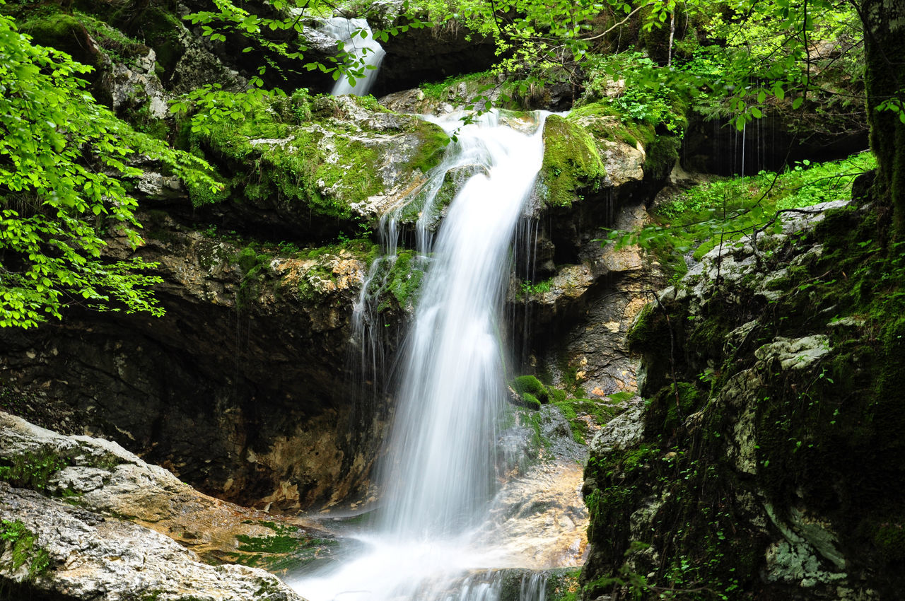 Beautiful stock photos of wasserfall, Beauty In Nature, Day, Flowing Water, Forest