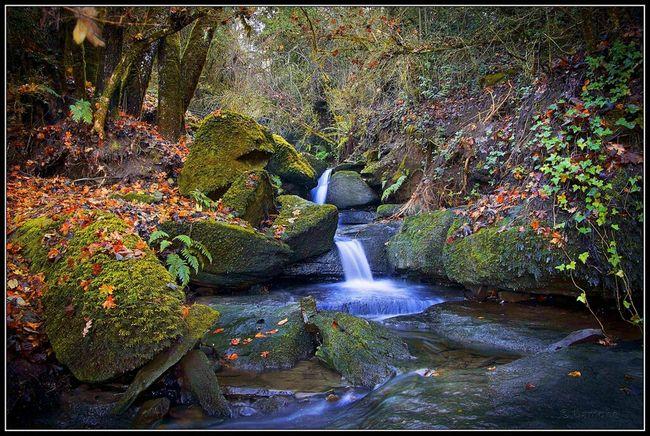 Nature Flora Landscape