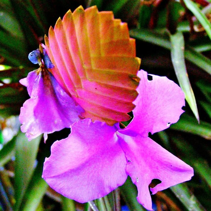 Pinks And Purples Flower Nature Naturalist Costa Rica Plants And Flowers Bromiliad