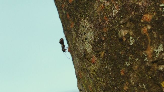 Ant Ant On Tree Insect Black Ant Hunting Tree Bark My Back Garden
