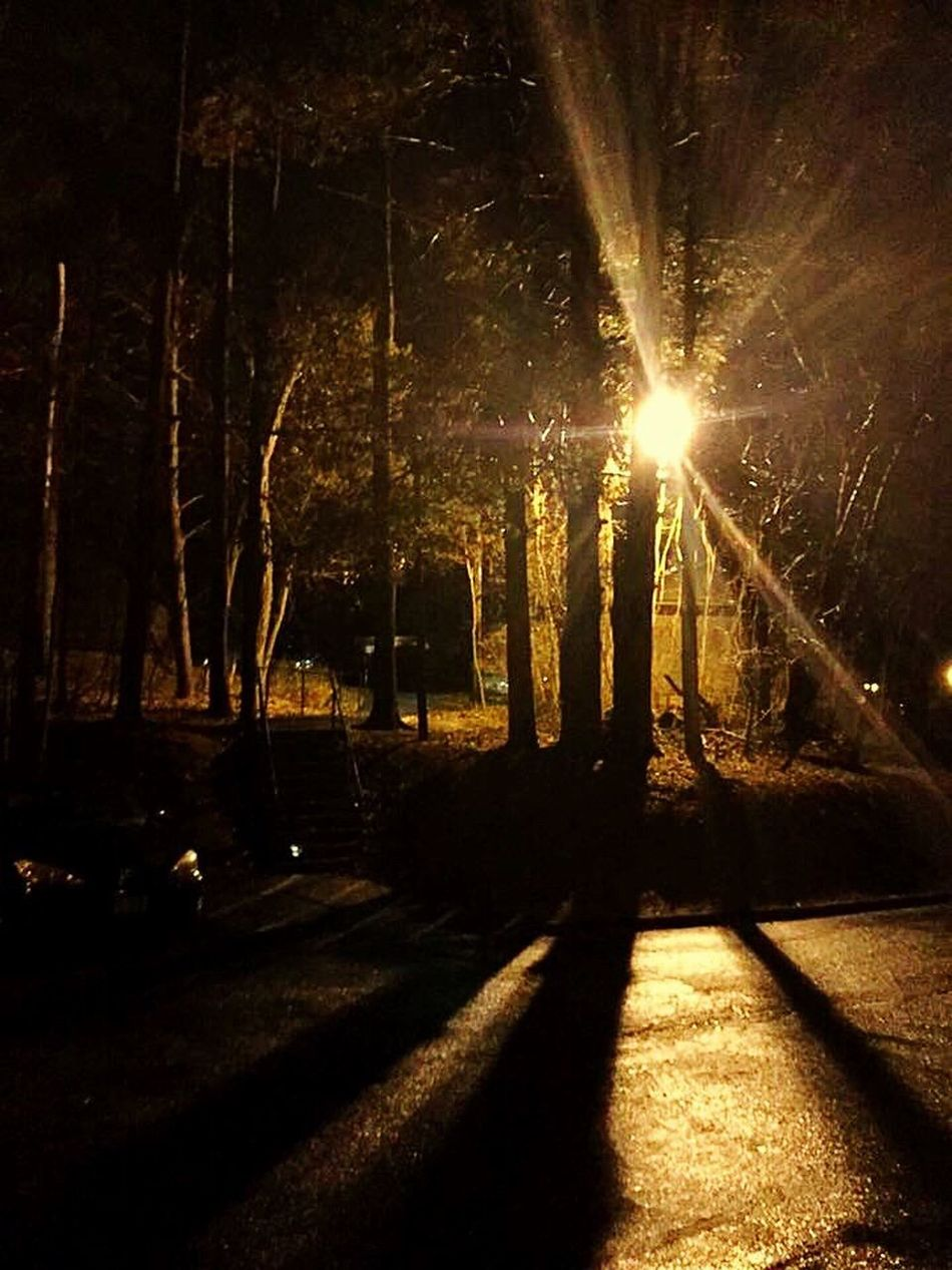 Night Photography Night Trees Eerie Beautiful Eerie Eerie Scene Eerie Trees