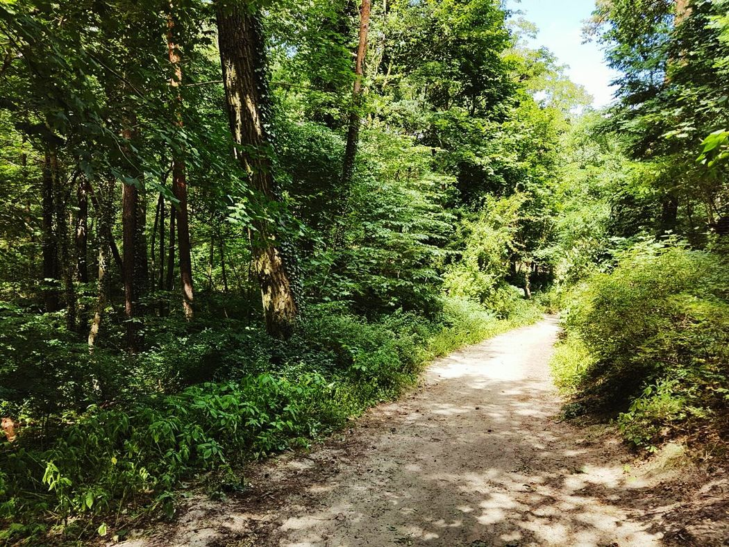 Mein Täglicher Spaziergang / My daily walk 💃 Wald Woods Walking In The Woods Light And Shadow Licht Und Schatten Waldspaziergang In The Woods Trees Waldweg Walk This Way Green Nature Spaziergang On The Way Love Nature EyeEm Nature Lover Sandweg Showcase July Hidden Gems  Home Is Where The Art Is
