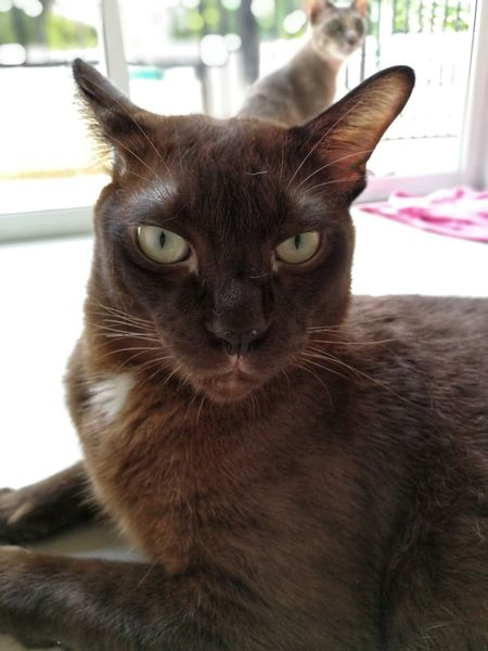 Cat Cat Thailand :) Domestic Cat Pets Looking At Camera Portrait Domestic Animals One Animal Mammal