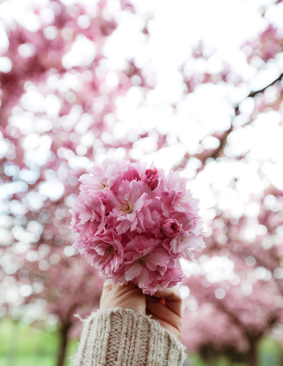 Flower Tree Pink Color Blossom Springtime Nature Branch Beauty In Nature Flower Head Plant No People Close-up Backgrounds Fragility Outdoors Day Growth Freshness Defocused Sky Nature Eye4photography  The Secret Spaces Eye4photography  Beauty In Nature