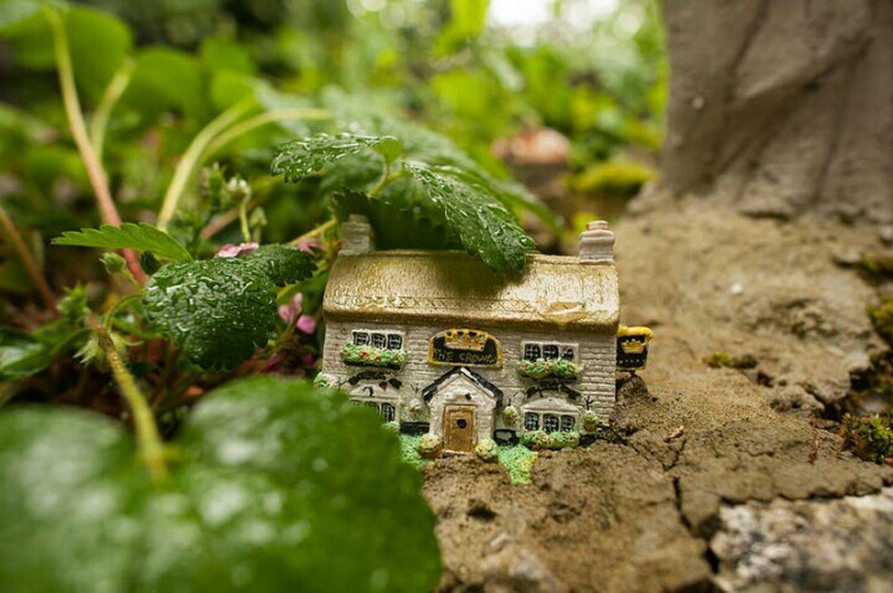 Nature On Your Doorstep Aliceinwonderland