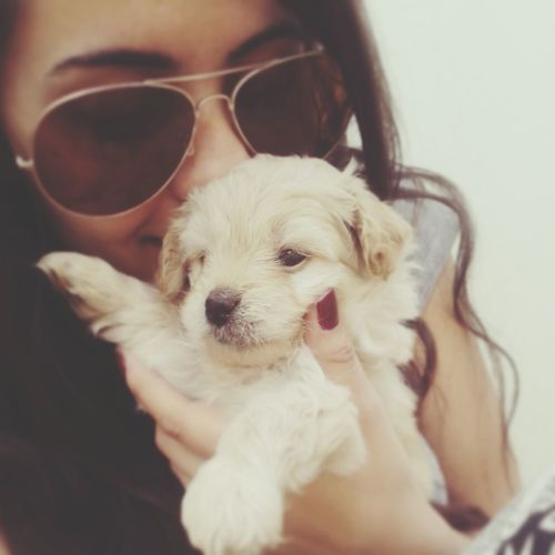 Dog Love My Love❤ ♥ Morris