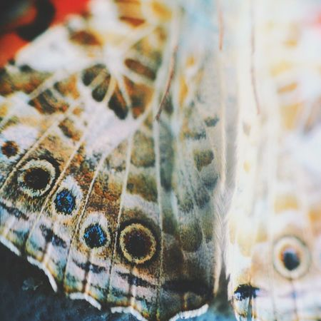 Butterfly wings Photography Nature Macro Butterfly Macro Beauty Pattern Pieces