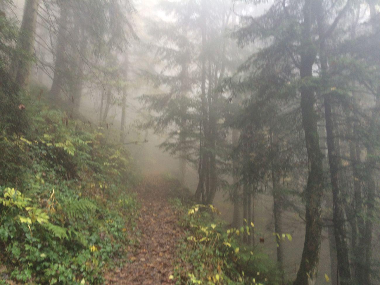 Fog Outdoor Mountain Bavarian Alps Inntal