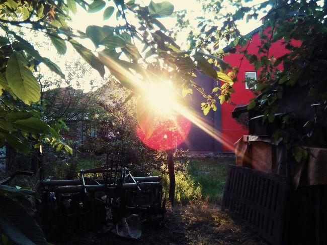 Sunset Countryside Life