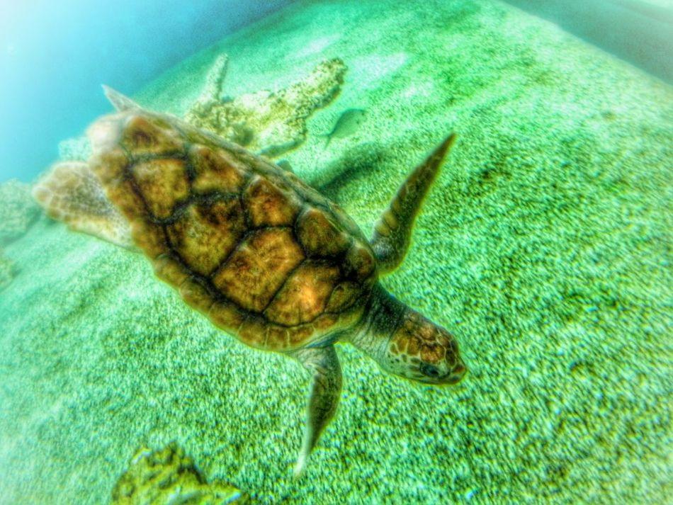 Turtle Oceancreatures Life Creation