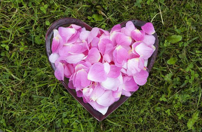 Rose Hips Briar Brier Hedge Rose Dogrose Wild Rose Petals Heart Grass Love Nature шиповник Estonia Eesti лепестки трава сердце сердечко эстония