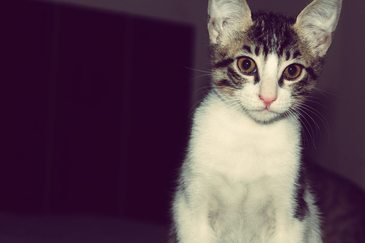 Mycat♥ SastaFotu Bharat India Animato Catlover ♡ EyeEmNewHere