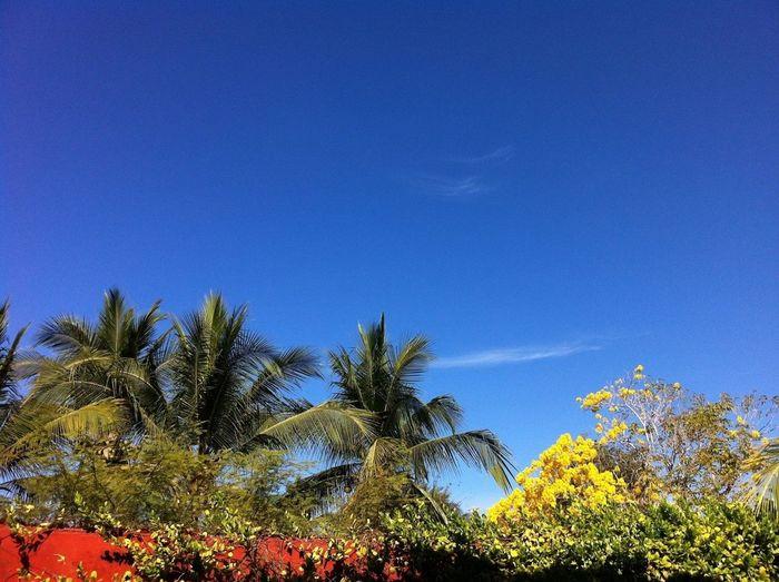 Palm Trees Mexico