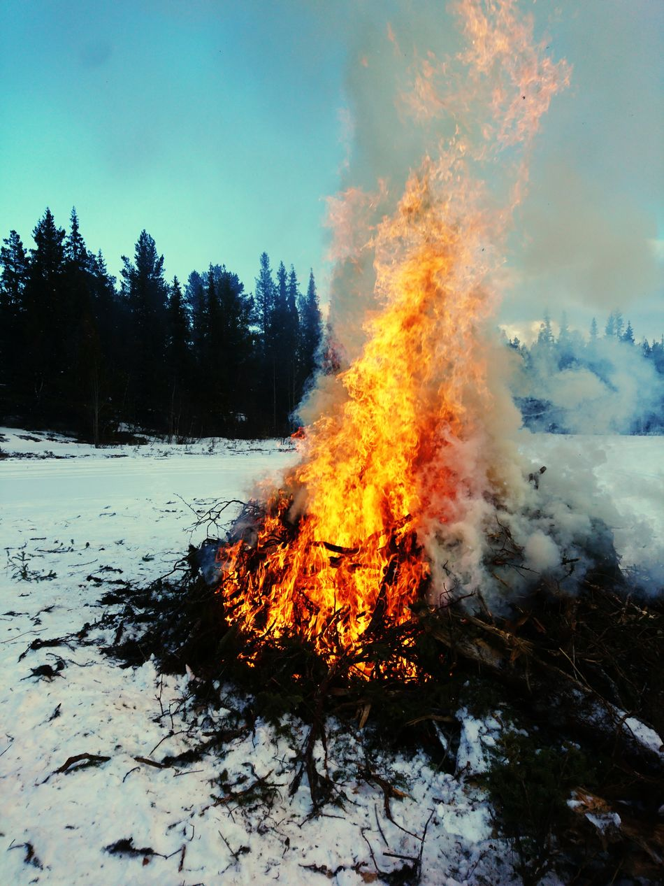 Fire Bonfire🔥 Cold Temperature Flame Burning Tree Burning Bushes And Trees