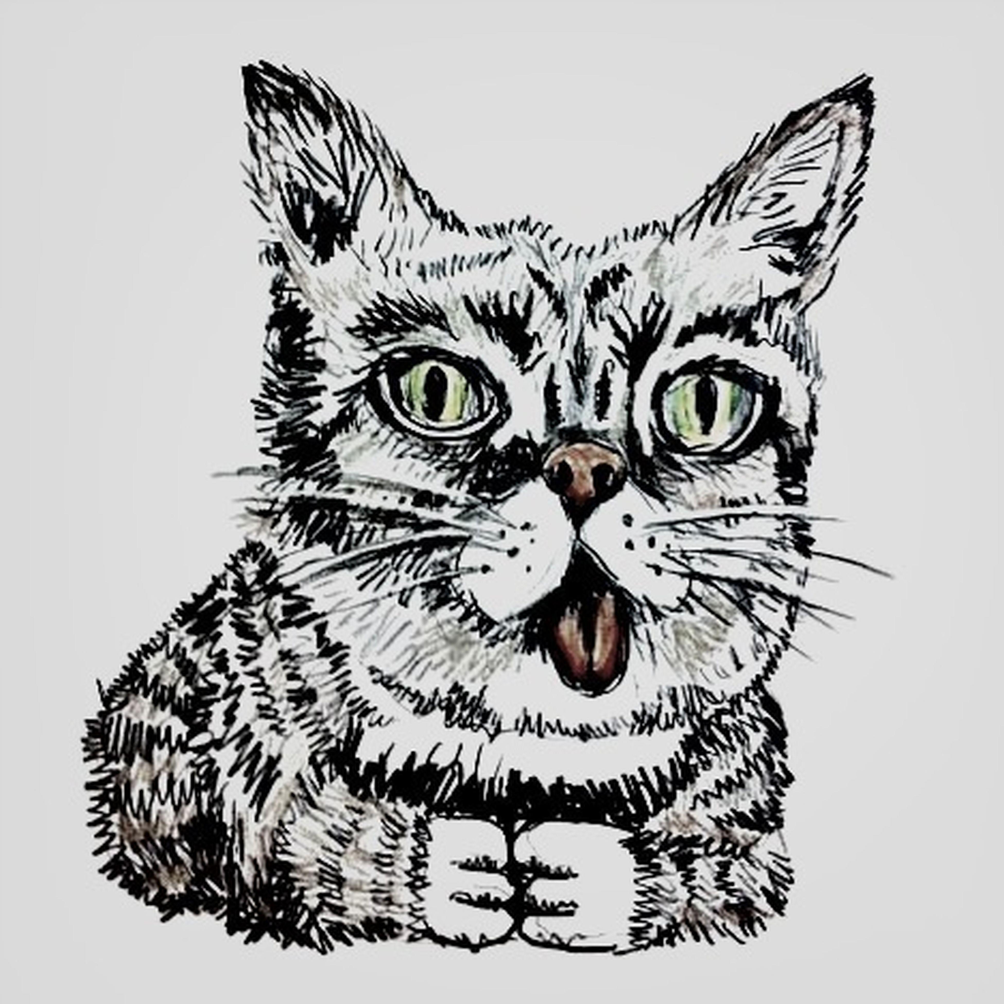 Catsoncatsoncats