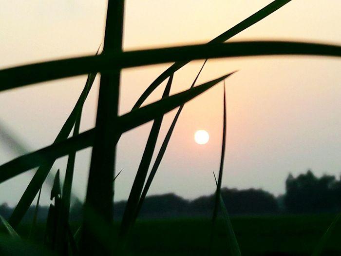 sunset veiw through grasses Nature Grass Sky First Eyeem Photo