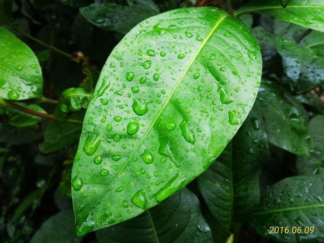 Just let it rain...☔ Rain Day