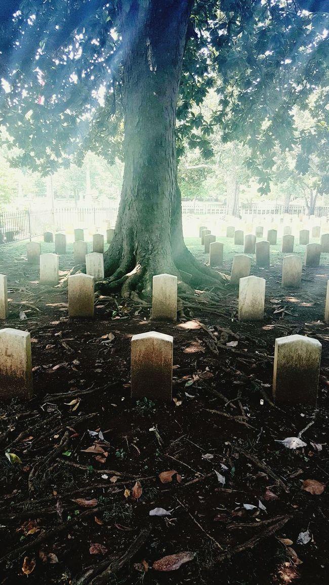 Confederate Dead Unknown Soldier Maple Hill