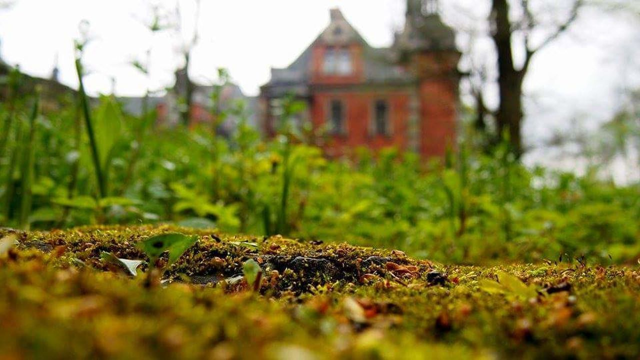 house, built structure, no people, nature, outdoors, day, architecture, leaf, growth, grass, building exterior, tree