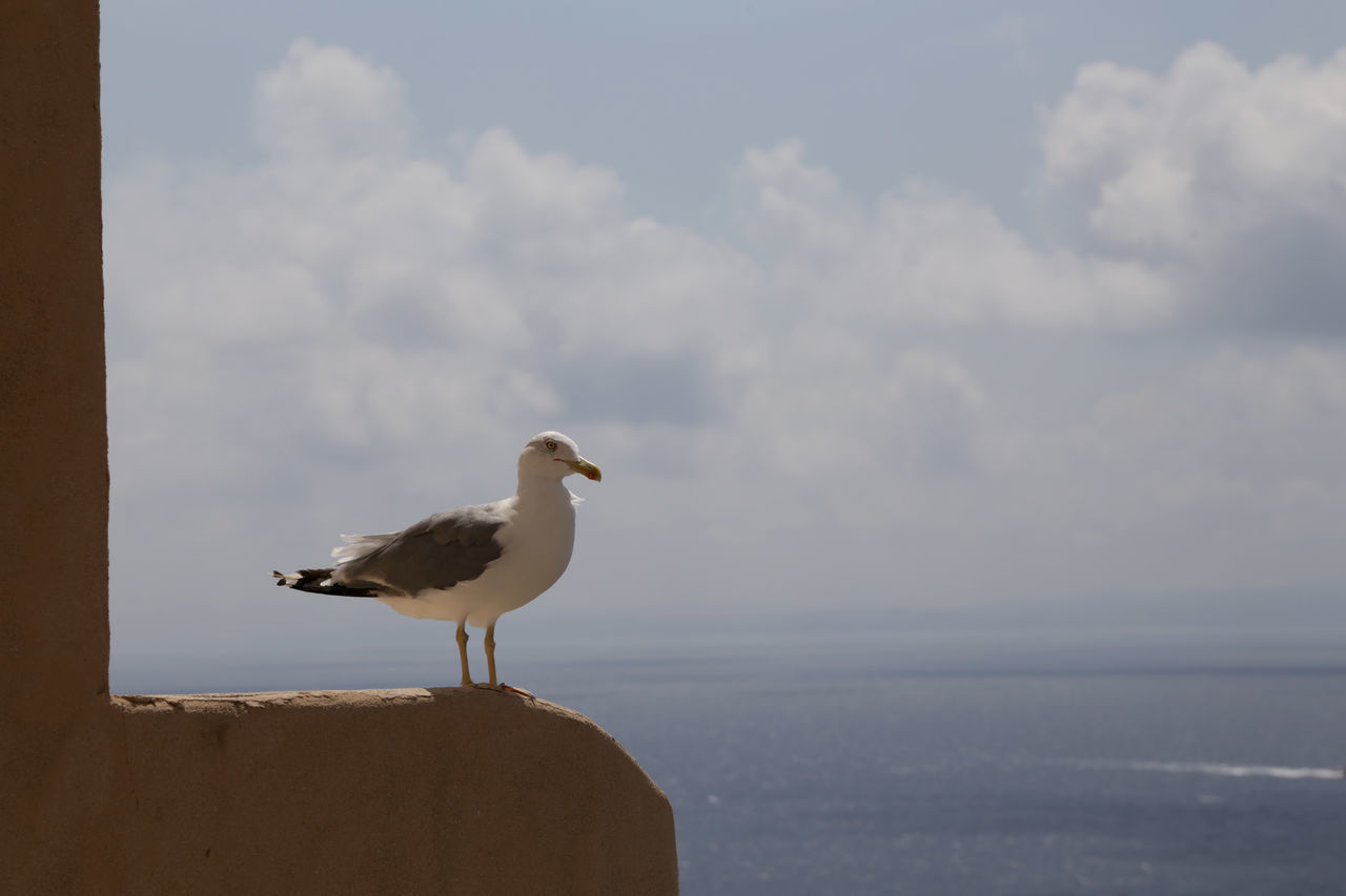 Seagull Perching On Rock At Seaside