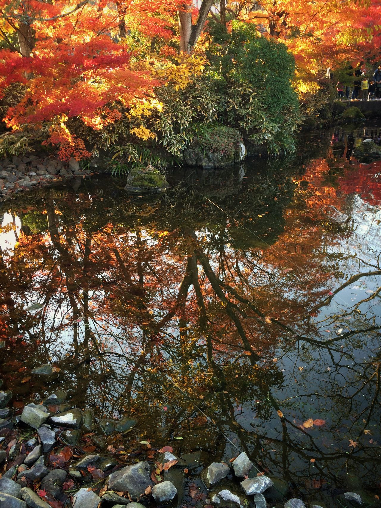 November Nature No People Autumn Tranquility Beauty In Nature Water Reflection Colors Japan Leaves🌿