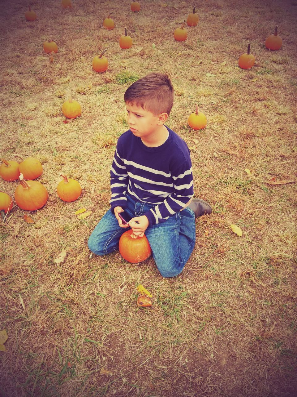 pumpkin, field, boys, childhood, one person, full length, real people, casual clothing, grass, day, food, autumn, outdoors, sitting, nature, halloween, people