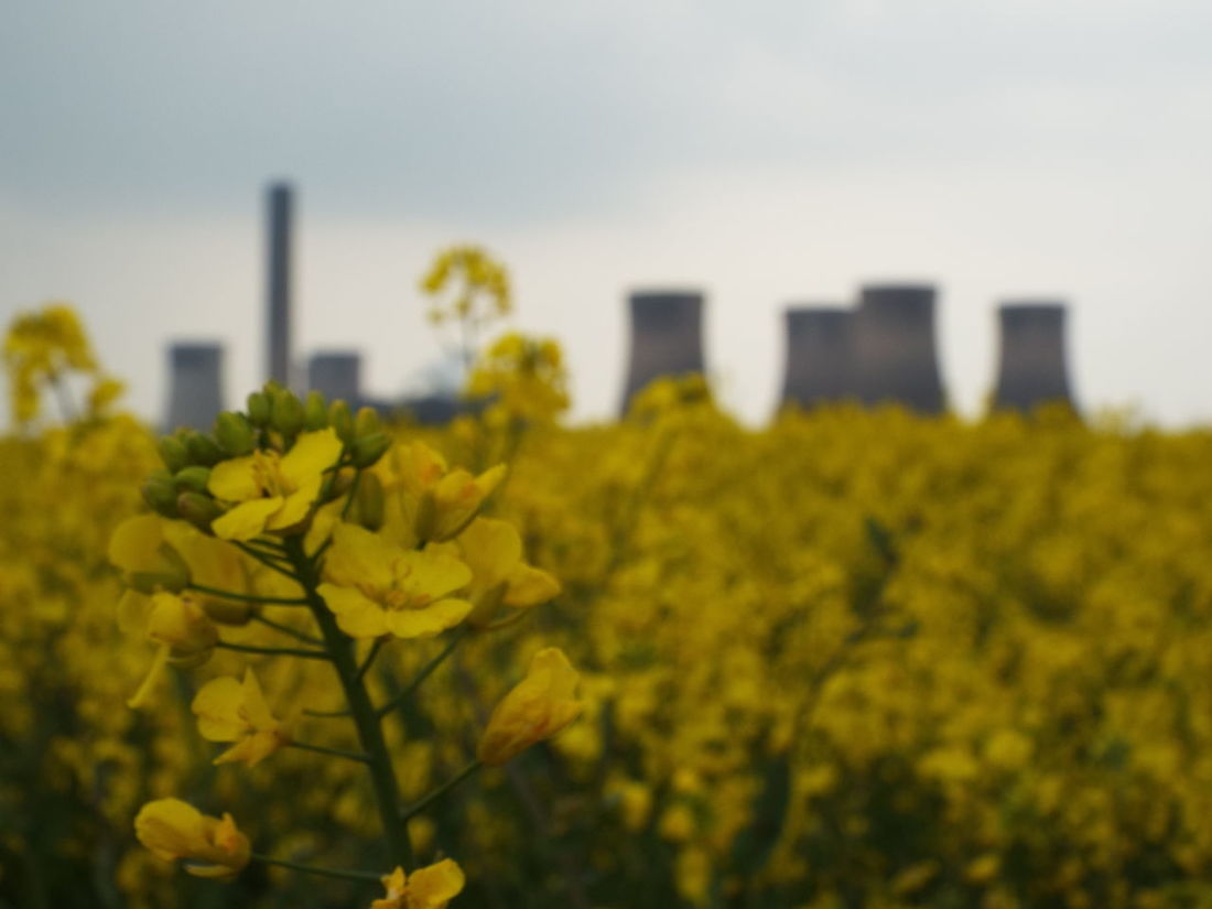 Industry Vs Nature Nature Vs. Industry Rapeseed Blossom Rapeseed Field Chimneys Power Station Fiddlers Ferry Power Station Fiddlers Ferry Sky - Clouds Depth Of Field