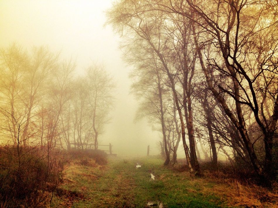 Into the fog Nature_collection EyeEm Nature Lover EyeEm Best Shots Landscape_Collection