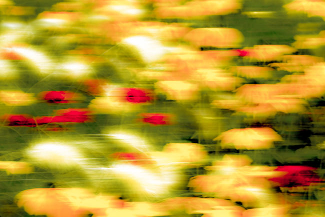 Flowers in motion Abundance Beauty In Nature Blooming Blossom Bright Flower Flower Head Fragility Fresh On Eyeem  Freshness FUJIFILM X-T2 Full Frame Garden Green Color Growth Large Group Of Objects Multi Colored Multicolored Nature Plant Red Softness Uncultivated Vibrant Color Capturing Motion