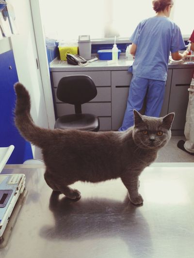 Pepper see vet at SPCA. This is the first time to be there. Vet is pro and nice charge is reasonable. Britishshorthair Pets Kitten Hong Kong