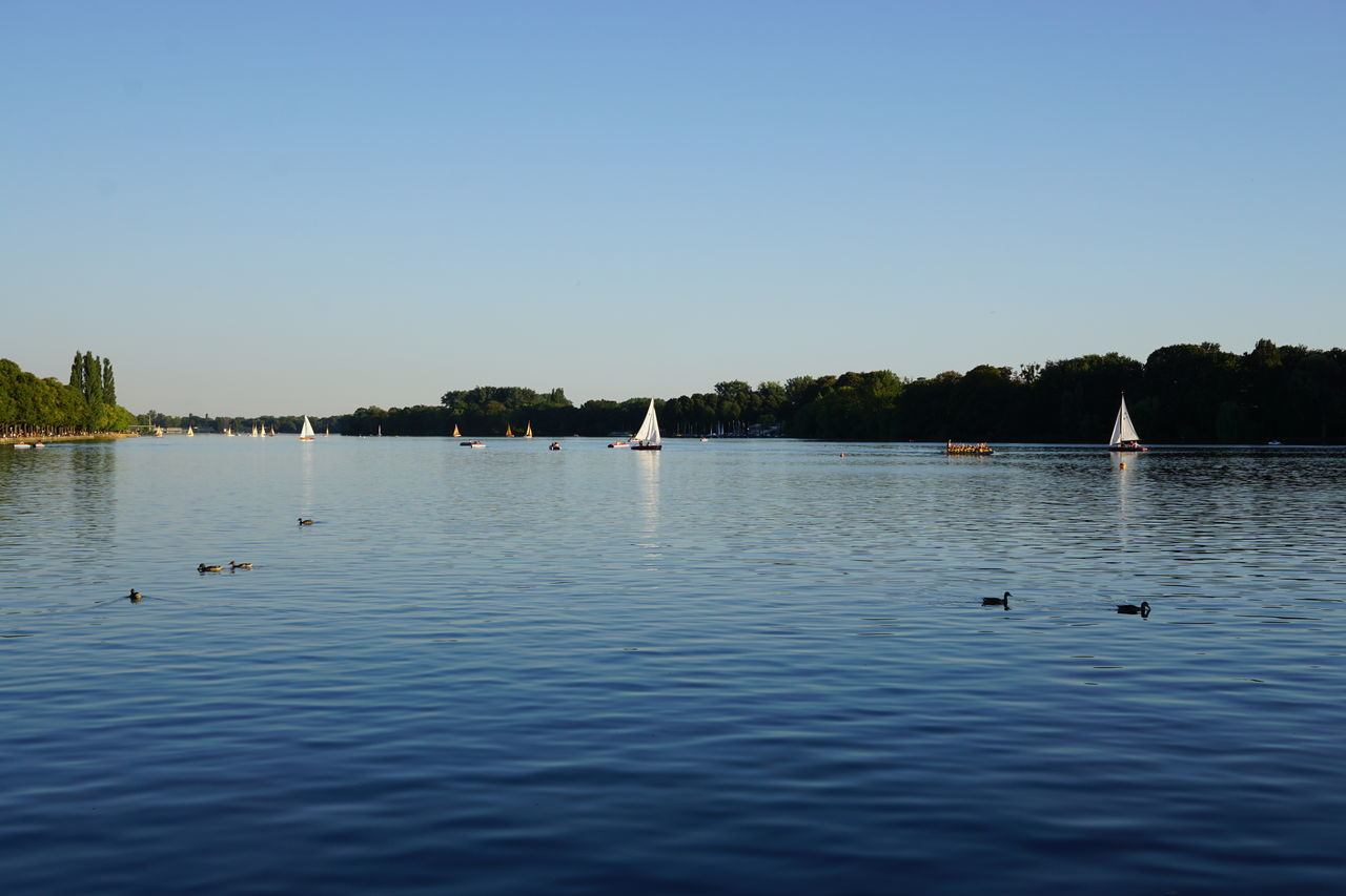 Maschsee Blue Boats Clear Sky Copy Space Duck Evening Light Germany Hannover Lake Leisure Activity Local Recreation Maschsee Outdoors Sailing Summer Water Watersports