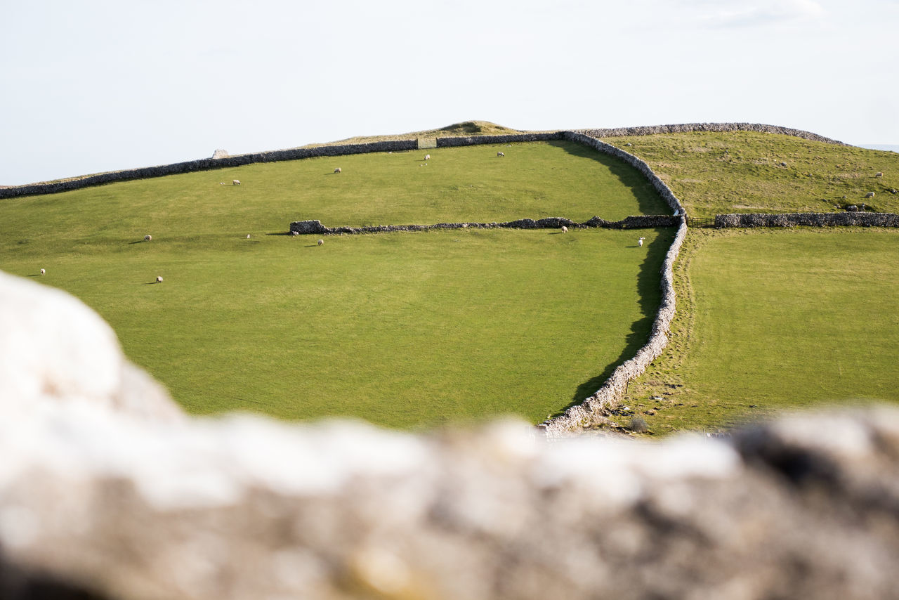 Agriculture Countryside Day Dry Stone Wall English English Countryside Farm Field Grass Green Color Landscape Livestock Nature Outdoors Rural Scene Scenics Sheep Sky Wall Walls Yorkshire Yorkshire Dales