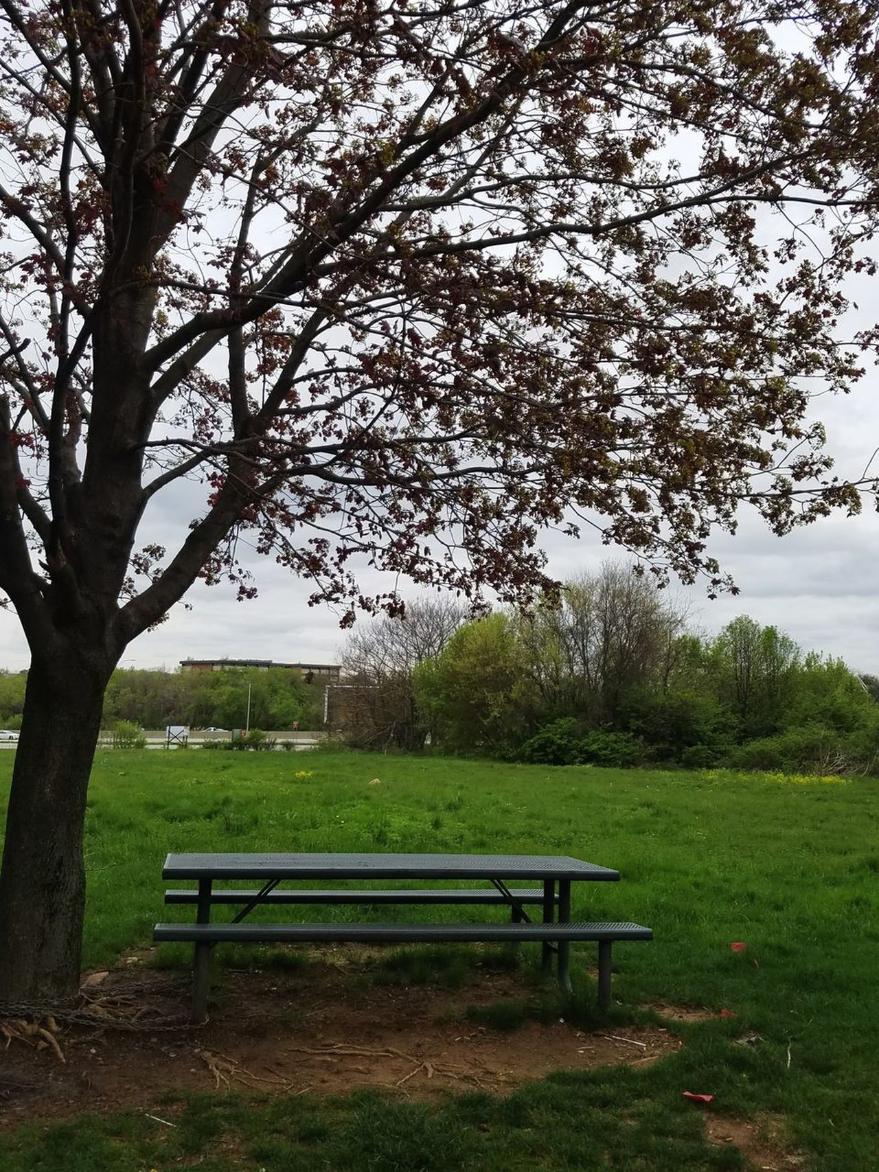 Take a seat Tree Nature Beauty In Nature Tranquility No People Growth Field Outdoors Freshness Day Grass Sky Picnic Table Relax Have A Seat Quiet