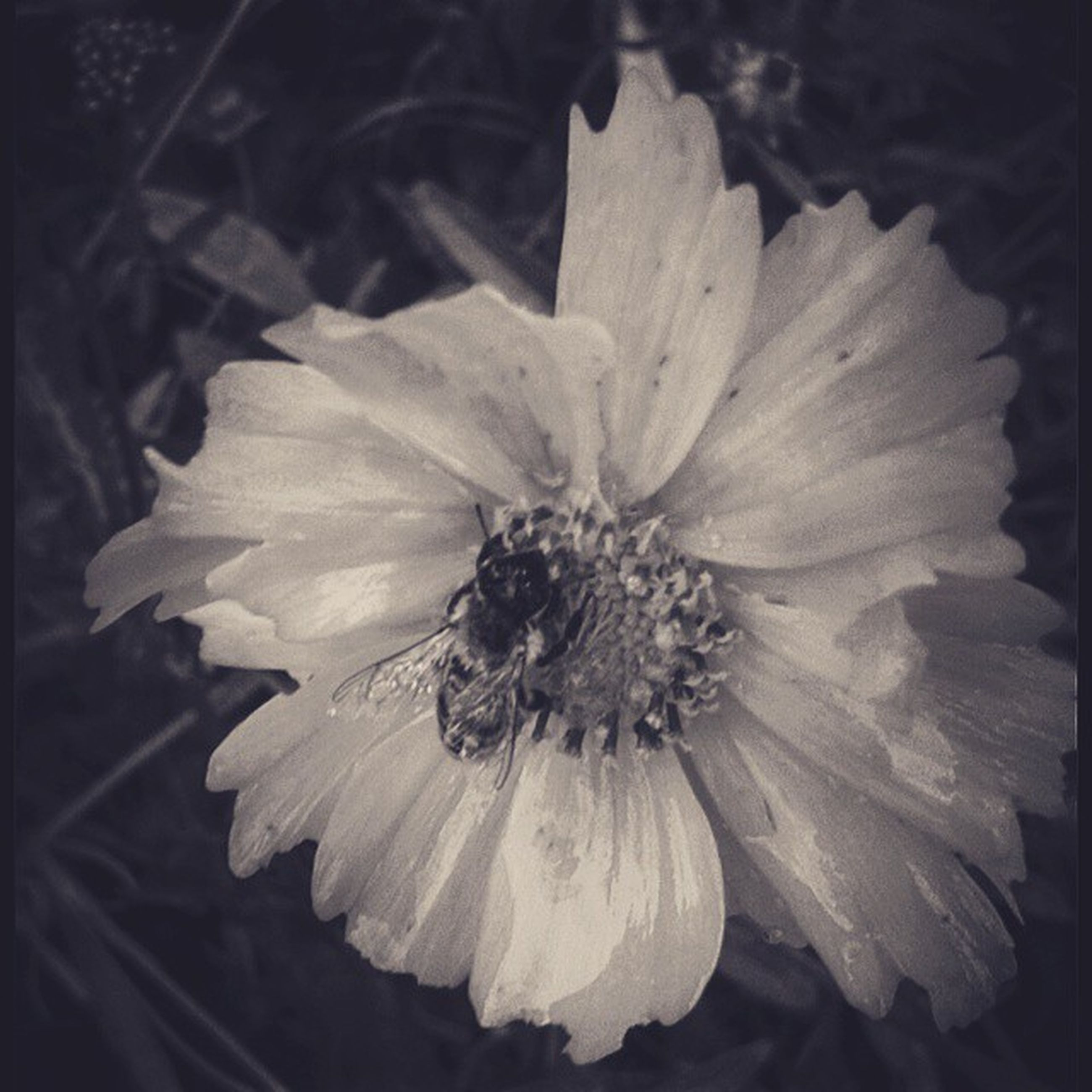 flower, petal, flower head, fragility, freshness, single flower, close-up, beauty in nature, pollen, growth, nature, blooming, stamen, in bloom, plant, focus on foreground, auto post production filter, outdoors, macro, selective focus