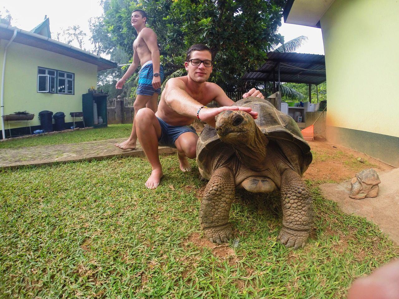 Exploring the islands of seychelles Seychelles Island Vacation Summer Giant Tortoise Tortoise BIG