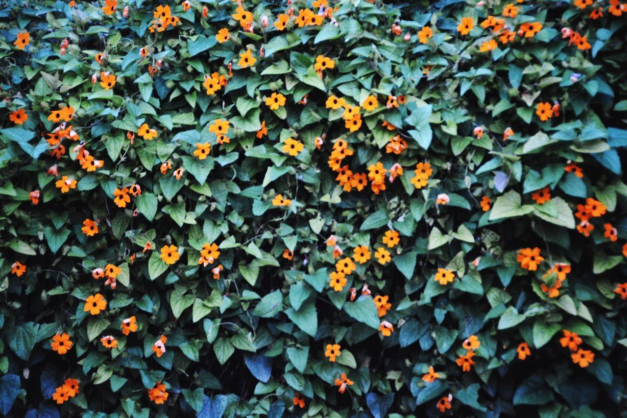 Natural Prints. Abundance Nature Growth Leaf Large Group Of Objects Beauty In Nature Backgrounds Textures And Surfaces Pattern, Texture, Shape And Form Pattern Flower Orange Repetition Patterns In Nature Repeating Patterns Repetitive Pattern