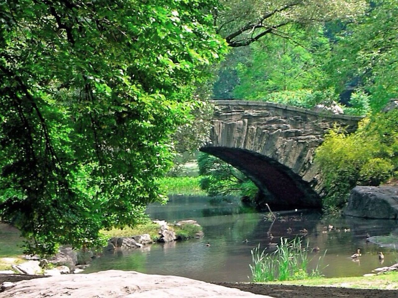 New York ..NYC .. CentralPark Bridge From Where I Stand