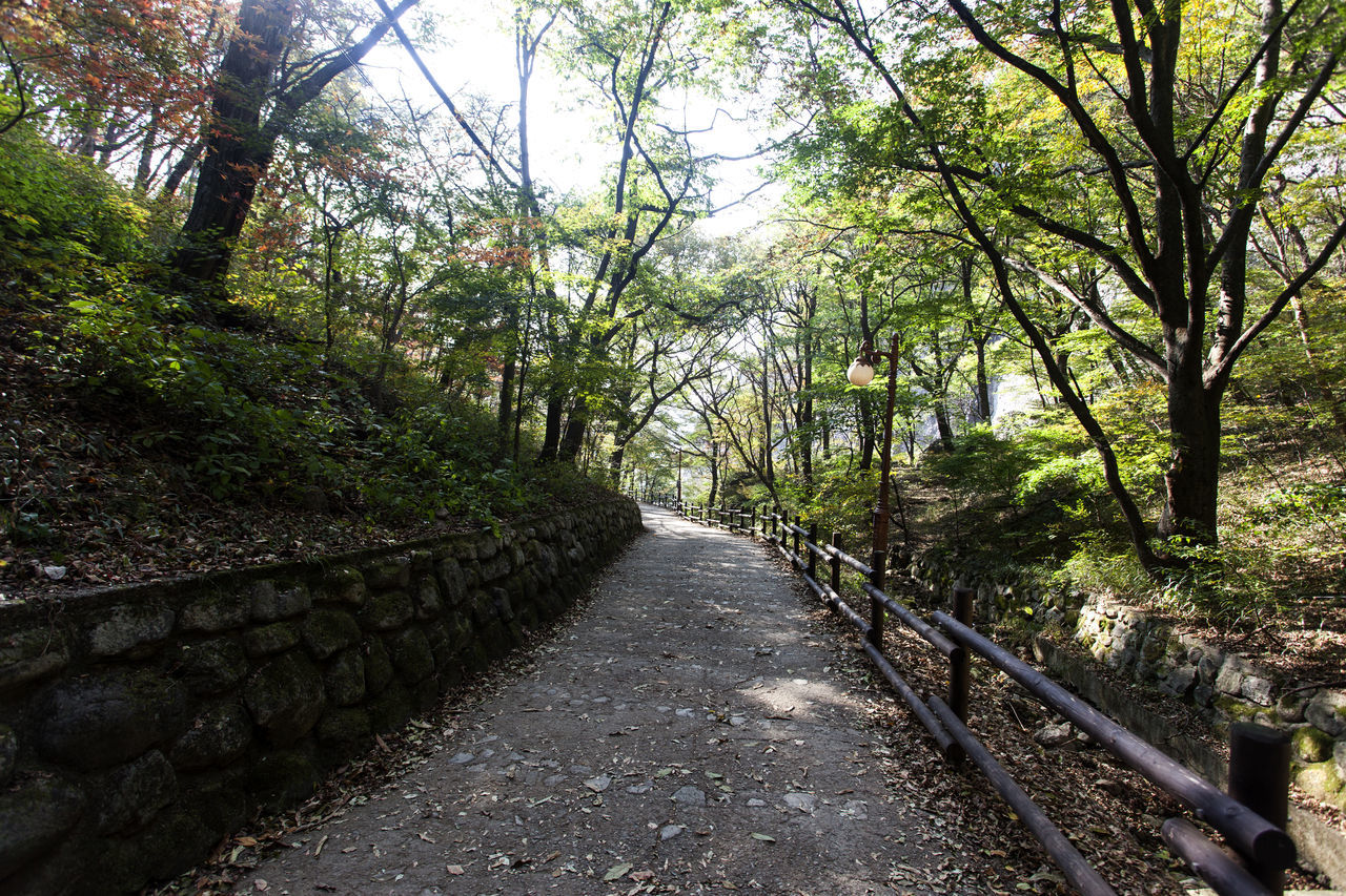 At Tapsa (Tower Temple) in Maisan, Jeonbuk, South Korea Autumn Beauty In Nature Buddhism Temple Day Fall Fashion Forest Growth Maisan Mountain Nature No People Outdoors Scenics Sky Tapsa The Way Forward Tranquil Scene Tranquility Tree Walkway