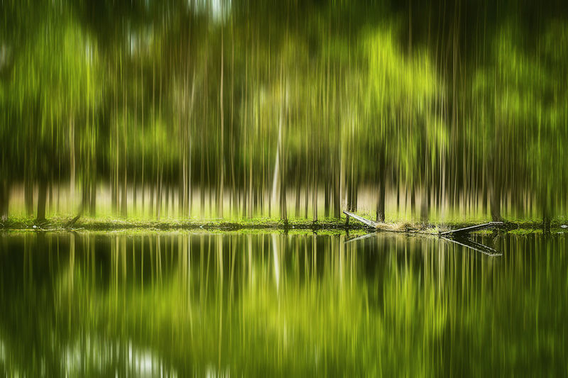 Beauty In Nature Blurred Motion EyeEmNewHere Green Color Growth Lake Nature Reflection Tree Water Waterfront