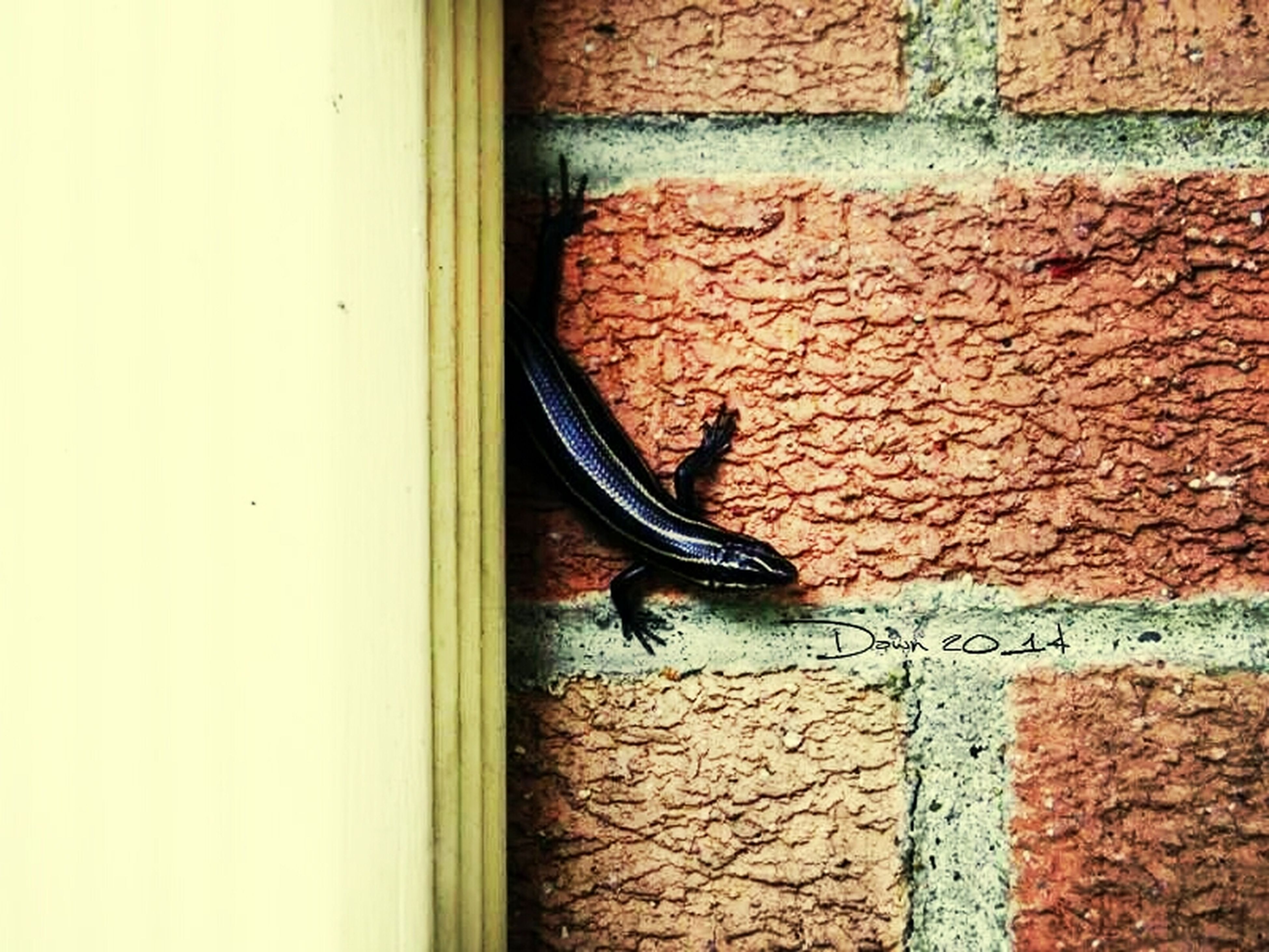 one animal, animal themes, animals in the wild, wildlife, wall - building feature, wall, lizard, built structure, insect, architecture, brick wall, side view, outdoors, full length, close-up, day, no people, building exterior, window, reptile