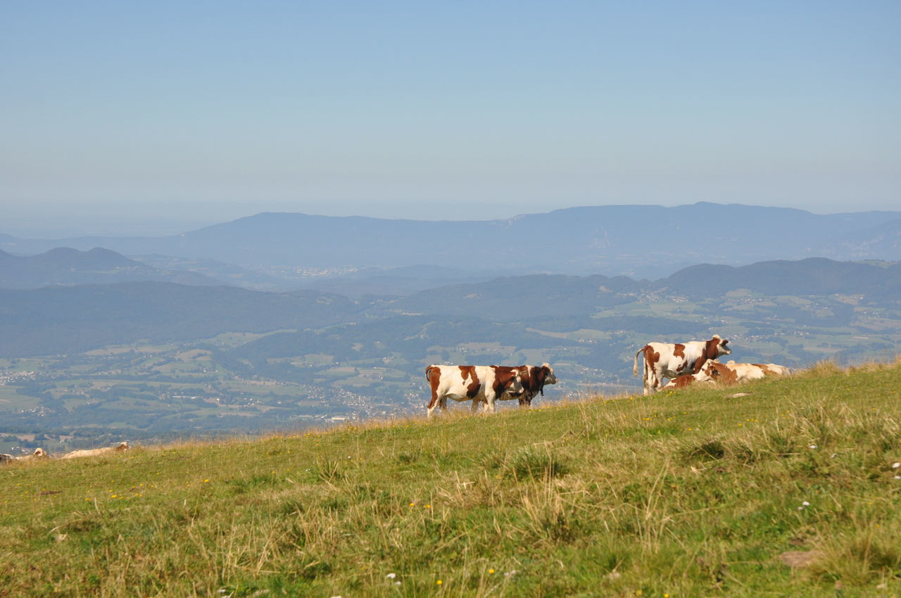 Animal Beauty In Nature Day Domestic Animals Landscape Livestock Mammal Mountain Nature No People Outdoors Sky
