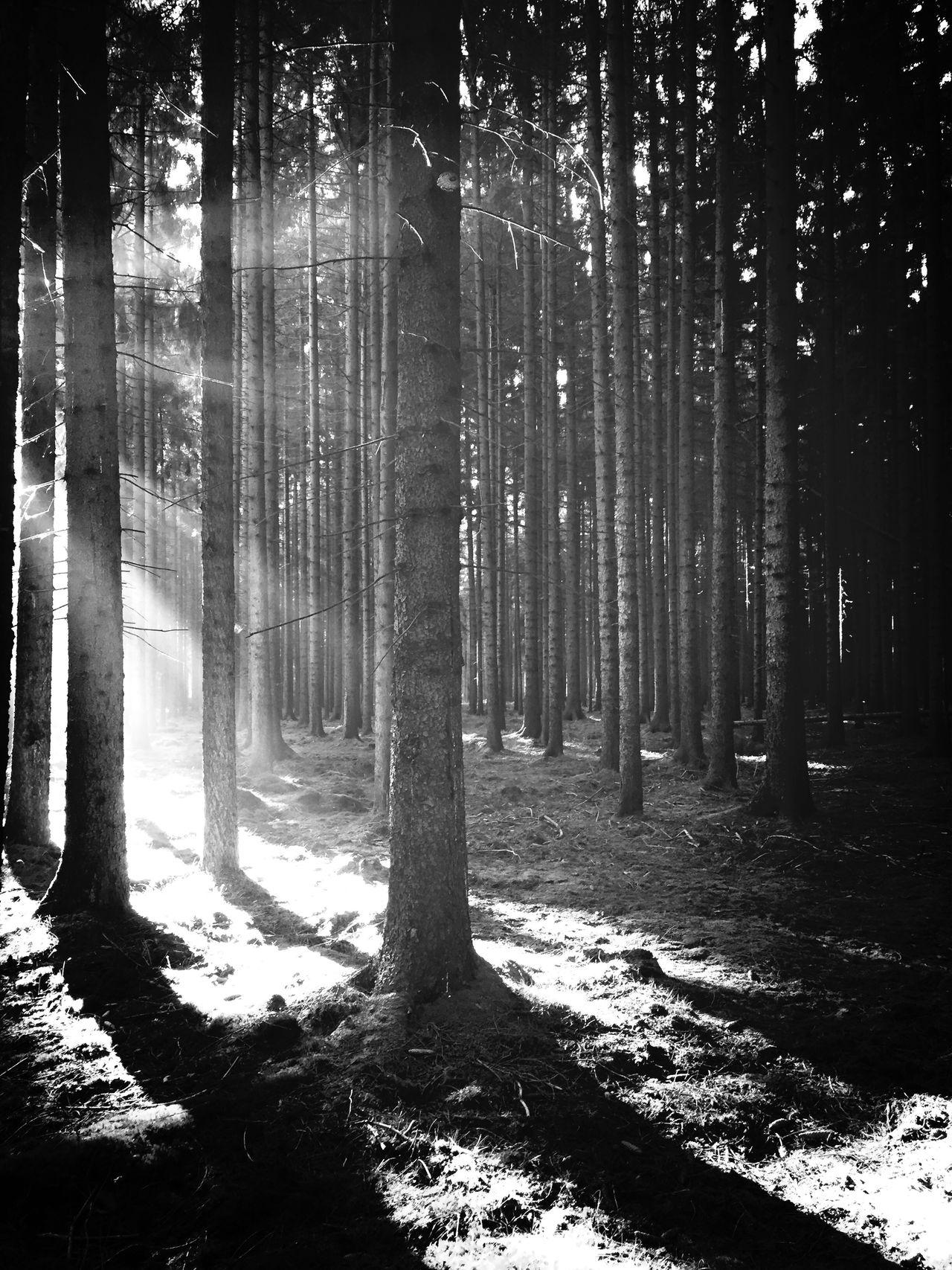 Blackandwhite Wood