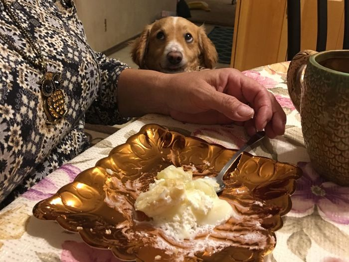 I see you has pie! I love pie! I would be ever so grateful for a bite! 🤣❤️🐕 Qurlie Dog Pets One Animal Food And Drink Rescuedog Sitting Close-up Human Hand Begging For Food Puppyeyes Pet Portraits