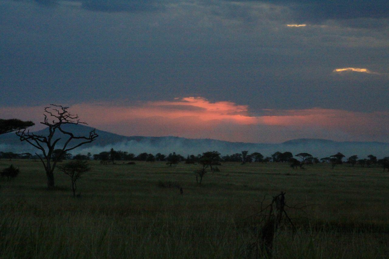 Serengeti Sunset Bare Tree Beauty In Nature Cloud - Sky Explore ExploreEverything Field Landscape Nature No People Outdoors Safari Savannah Scenics Serengeti Serengeti National Park Sky Sunset Tanzania Travel Travel Destinations