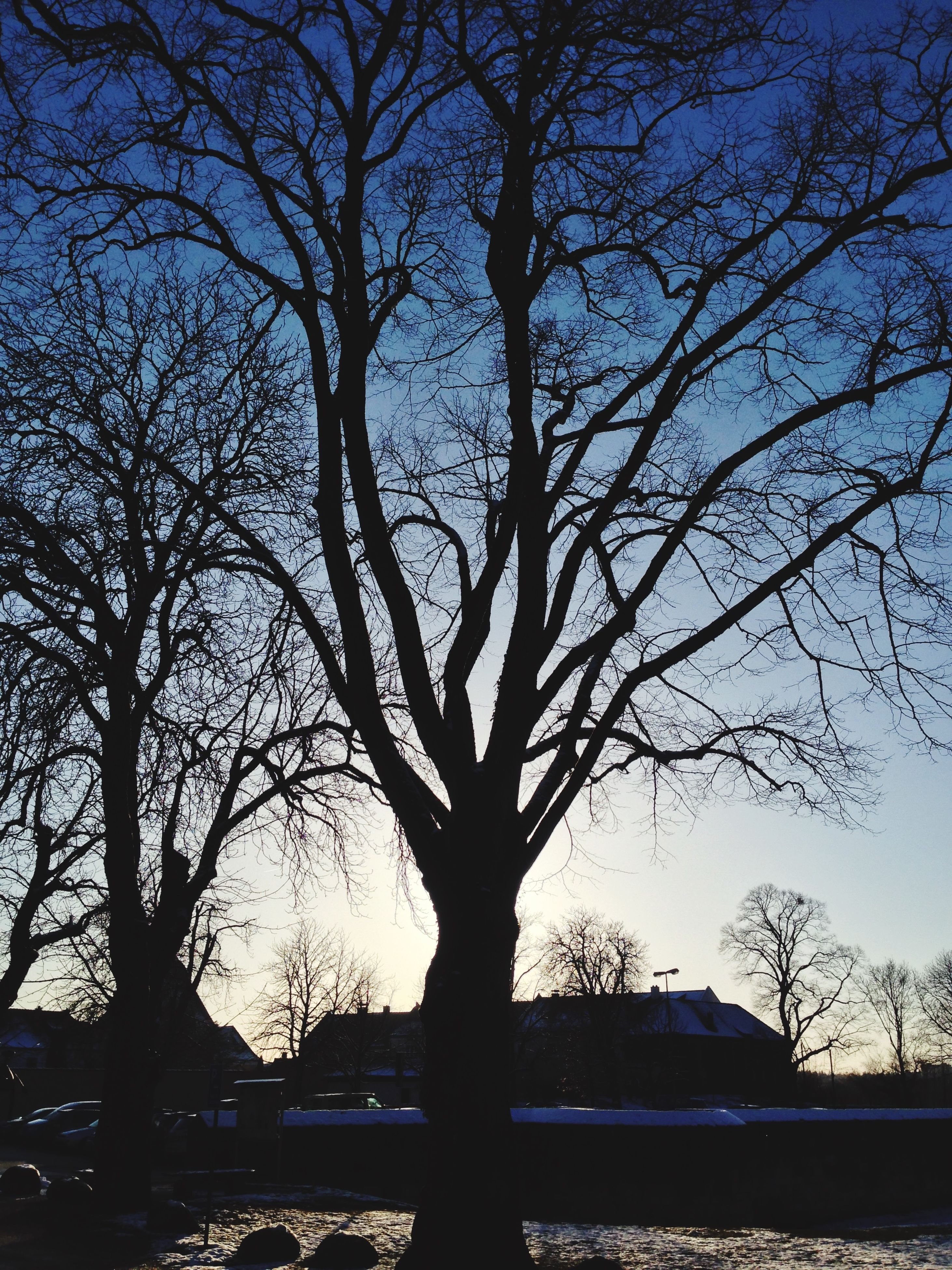 tree, bare tree, branch, silhouette, tranquility, tranquil scene, scenics, nature, beauty in nature, sky, tree trunk, sunset, clear sky, low angle view, idyllic, outdoors, no people, growth, non-urban scene, sunlight