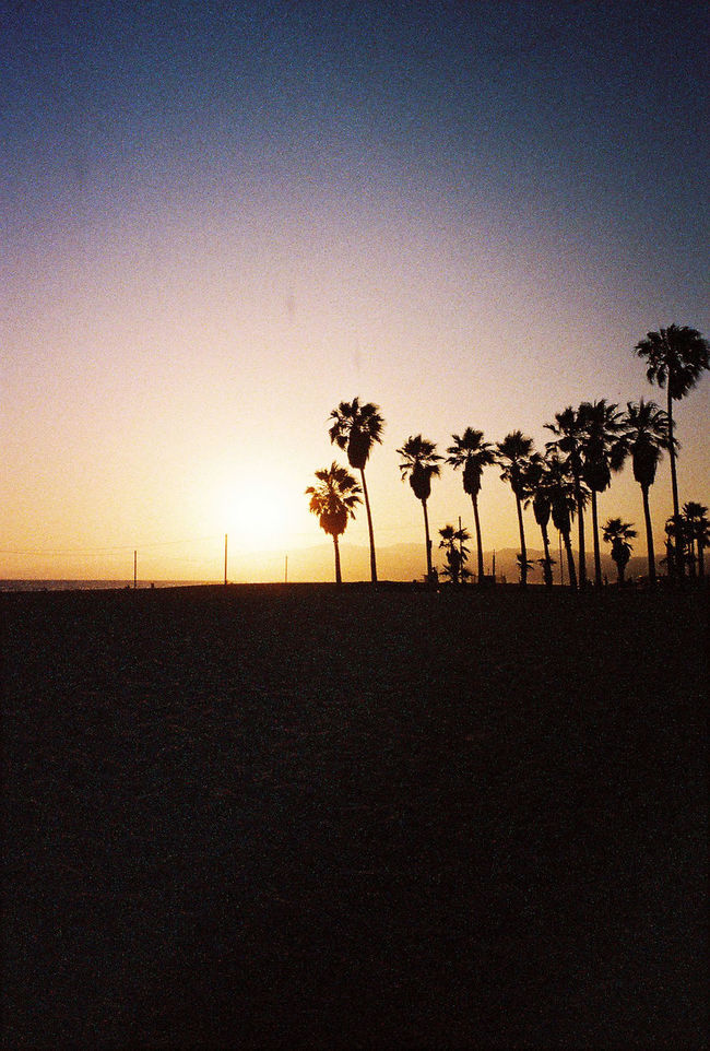 Atmosphere Copy Space Distant Dusk Flag Getting Away From It All Identity Low Angle View Outdoors Outline Palm Tree Patriotism Pole Silhouette Sky Street Light Summer Tree Tropical Climate Wind