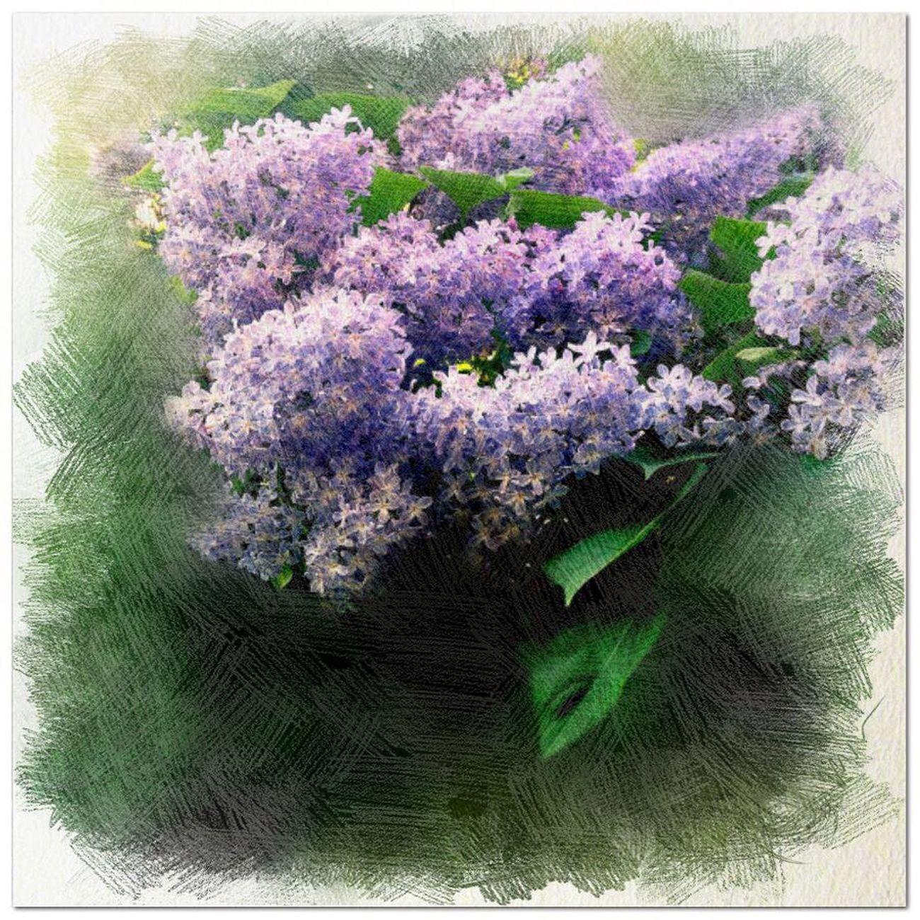 Flowers IPhoneography Photolabpro Peggyshobbies.com Painterly